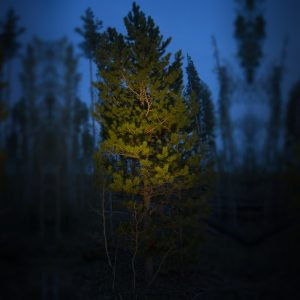 Pine Tree Lit by LED-FG1021 Directional Accent Spot Light